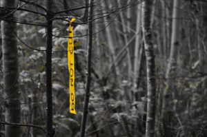 If you're walking about in Lot 450 and encounter some of these yellow ribbons, you may be wondering what it's all about...