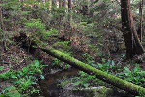 McGuffie Creek, 18 May 2015